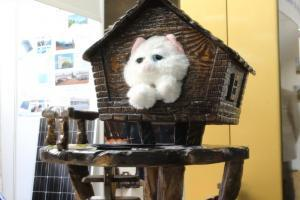 Кошачья будка